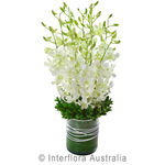 Virtue - Orchid Presentation in a Glass Vase