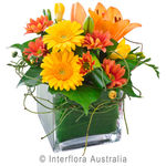 Ginger - Mixed Arrangement in a Glass Cube