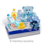 Cuddles for Him - Teddy Bear with a Selection of Baby Care Goods