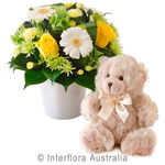 Morgan - Bright Mixed Arrangement with a Teddy Bear