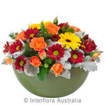 Merri - Bright Mixed Arrangement