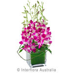 Violetta - Orchids in a Glass Cube