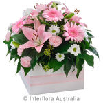Softness - Mixed Box Arrangement