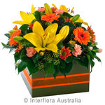 Dazzling - Mixed Box Arrangement