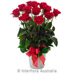 Impulse - Arrangement of 12 Red Roses in a Ceramic Pot